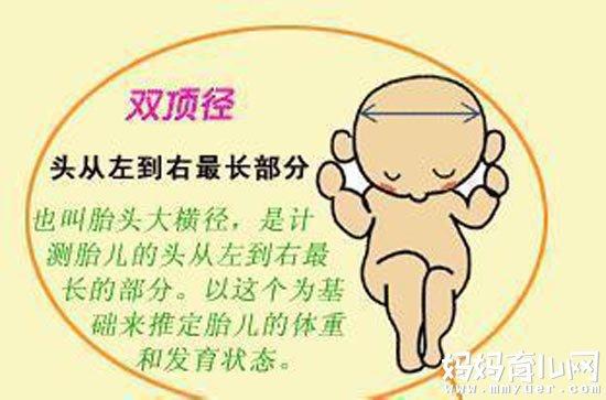 医生常常说的双顶径是什么意思 原来是胎儿的这个部位!