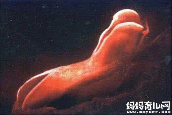 胚胎发育的各个时期图 原来胚胎在肚子里是这副模样