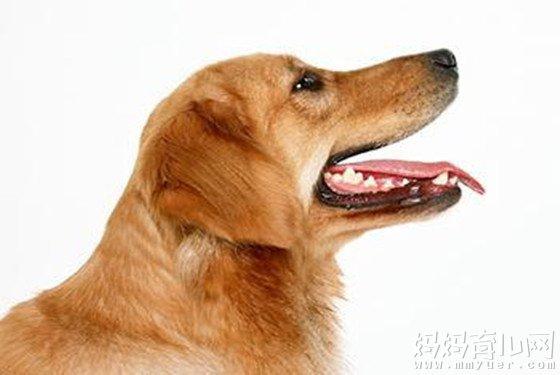 狂犬病发作什么症状 狂犬病潜伏期最长多久