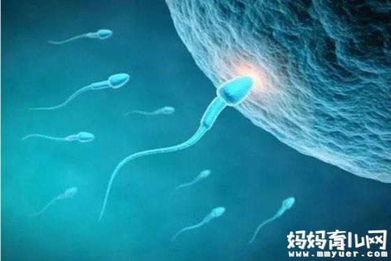 当这些症状出现时 很有可能是受孕成功的前兆表现