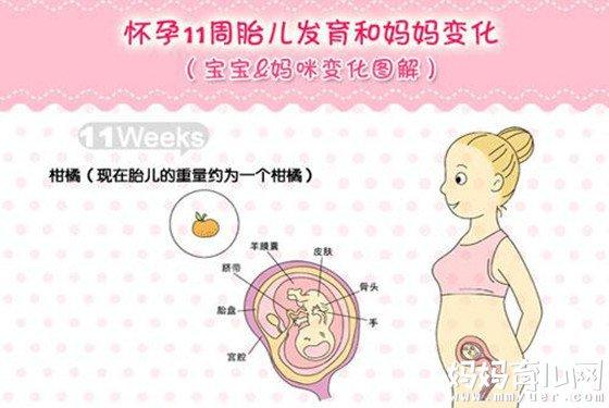 怀孕12周肚子有多大_怀孕三个月胎儿有多大 怀孕9-12周胎儿图为你解答(2) - 妈妈育儿网