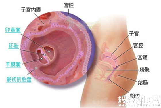 怀孕一个月胎儿图  解秘孕0-4周胎儿的变化