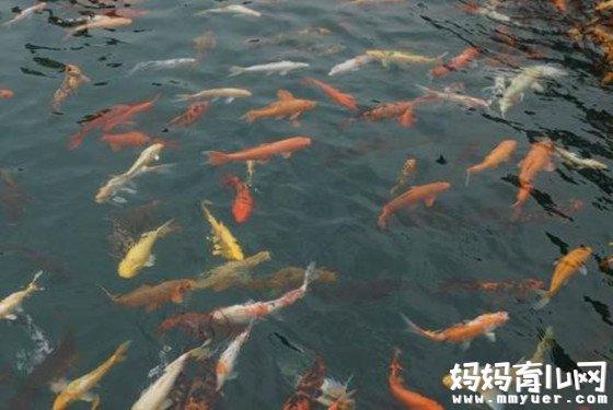 梦见鱼是生儿子吗 周公解梦之孕妇梦见鱼胎梦寓意