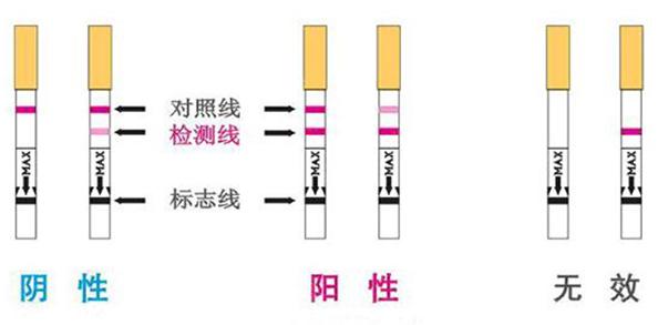 试孕纸怎么看怀孕结果 主要看红线是阳性来还是假阳性