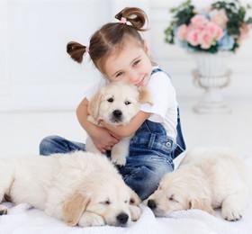 托班科学教案《我家的小动物》了解和懂得爱护小动物