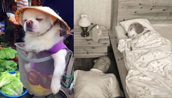 日常搞笑故事配图小狗当家 戏精小狗当家图片