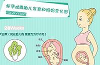betway必威登录4-7个月需要注意的知识小科普(附胎儿发育图)
