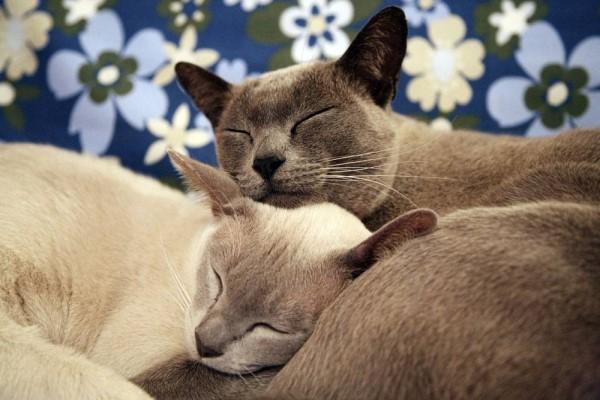 孕妇梦见猫追我