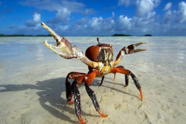 宝宝多大可以吃螃蟹吗 螃蟹虽好可千万不能乱吃