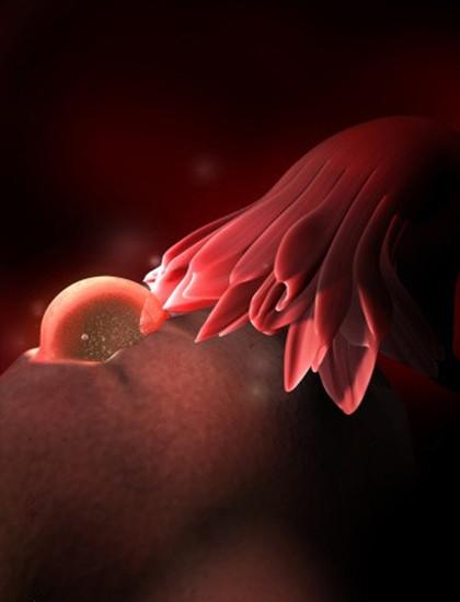 孕期小百科:快乐赛车开奖网1一9月胎位变化图(彩色3D 图)